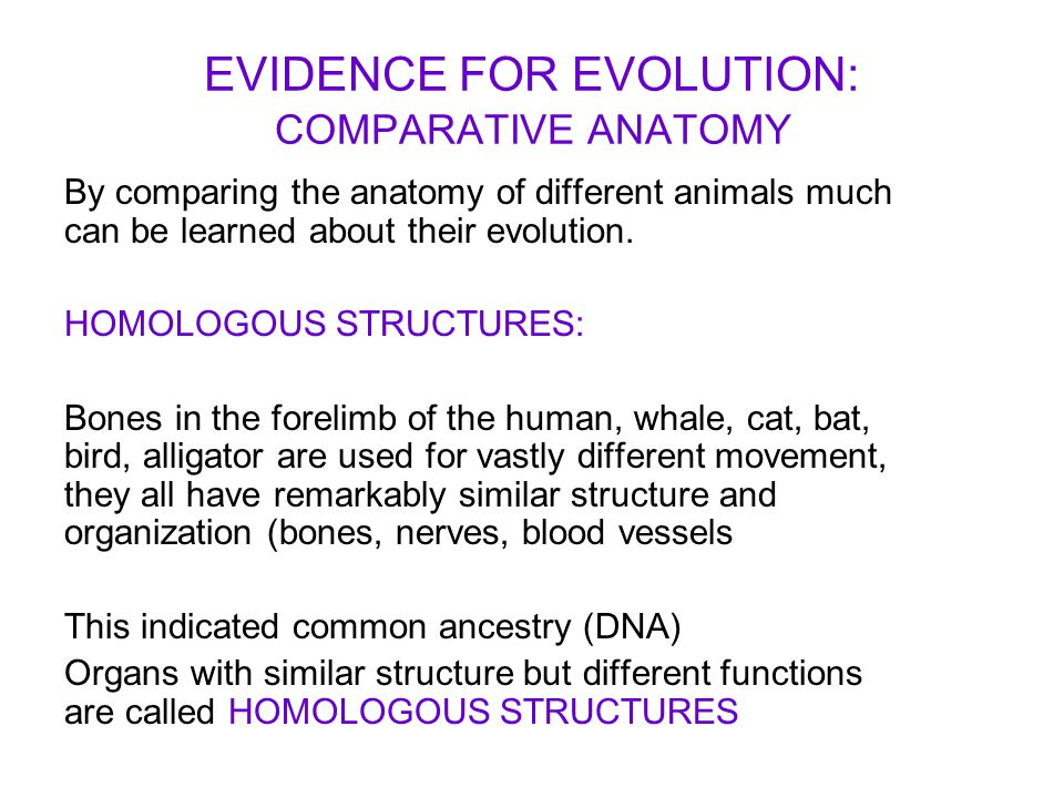EVIDENCE FOR EVOLUTION: COMPARATIVE ANATOMY - ppt video online download