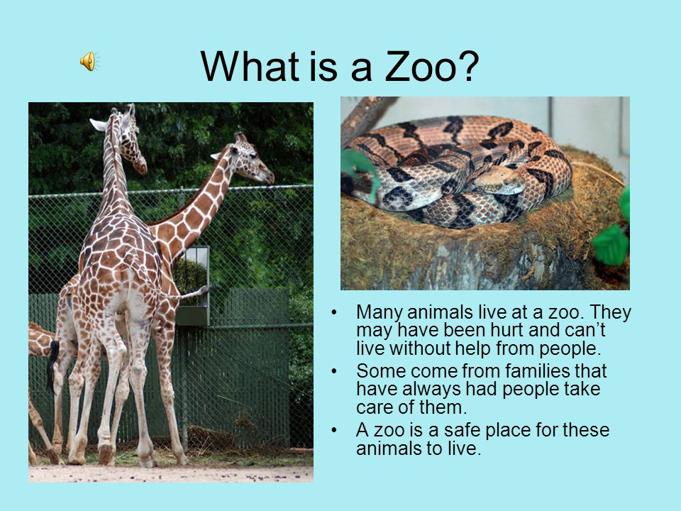 essay about trip to zoo