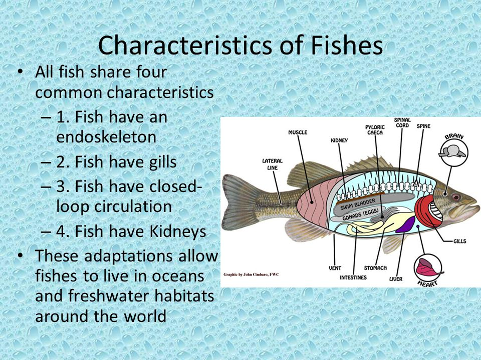 introduction to fishes ppt video online download