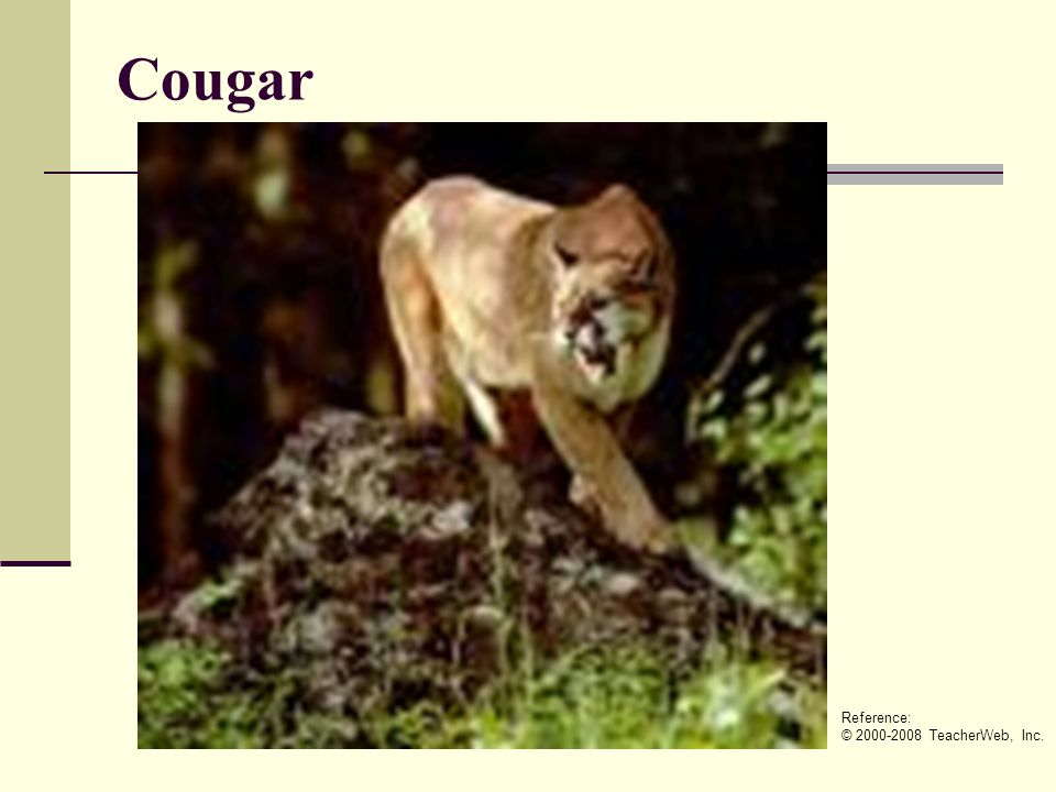 Cougar Reference: © 2000-2008 TeacherWeb, Inc.