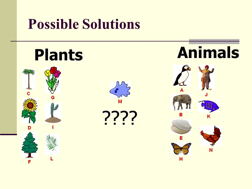 Possible Solutions Animals Plants