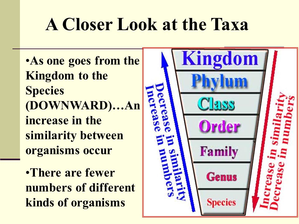 A Closer Look at the Taxa