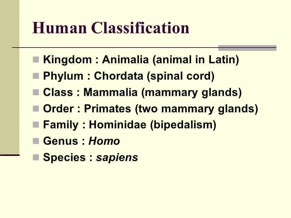 Human Classification Kingdom : Animalia (animal in Latin)