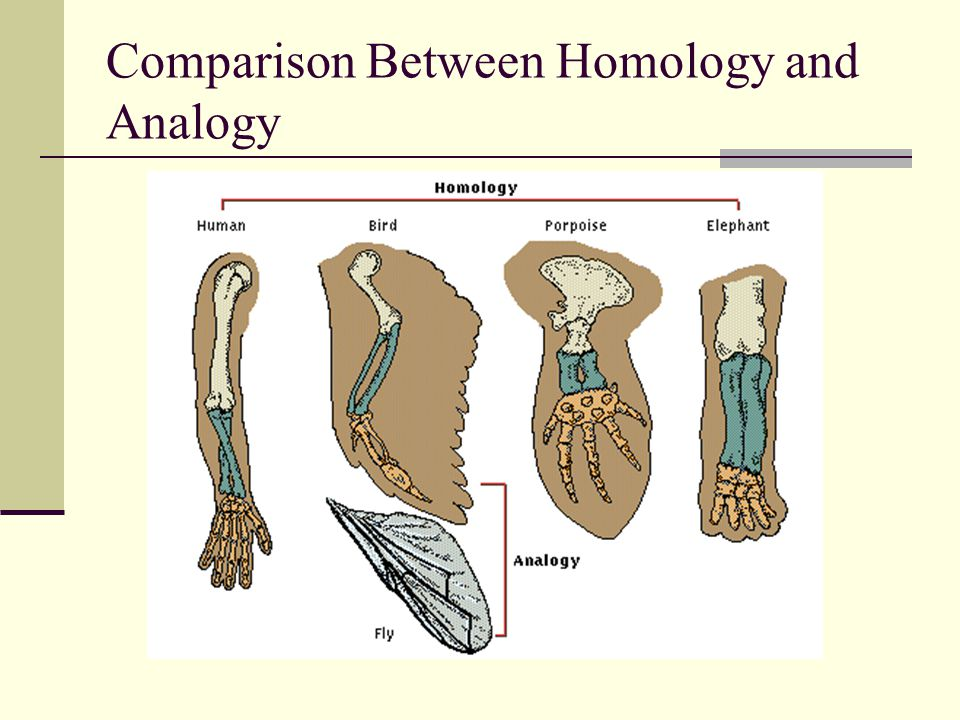 Comparison Between Homology and Analogy