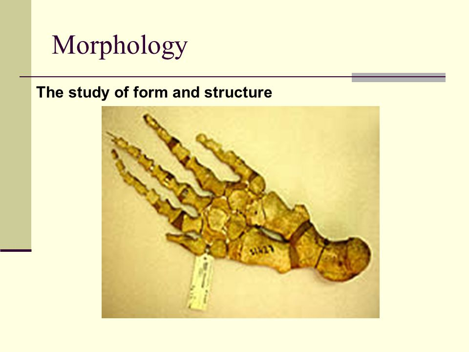 Morphology The study of form and structure