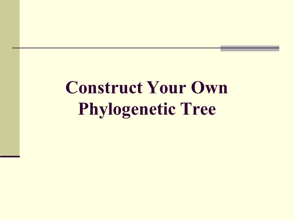 Construct Your Own Phylogenetic Tree