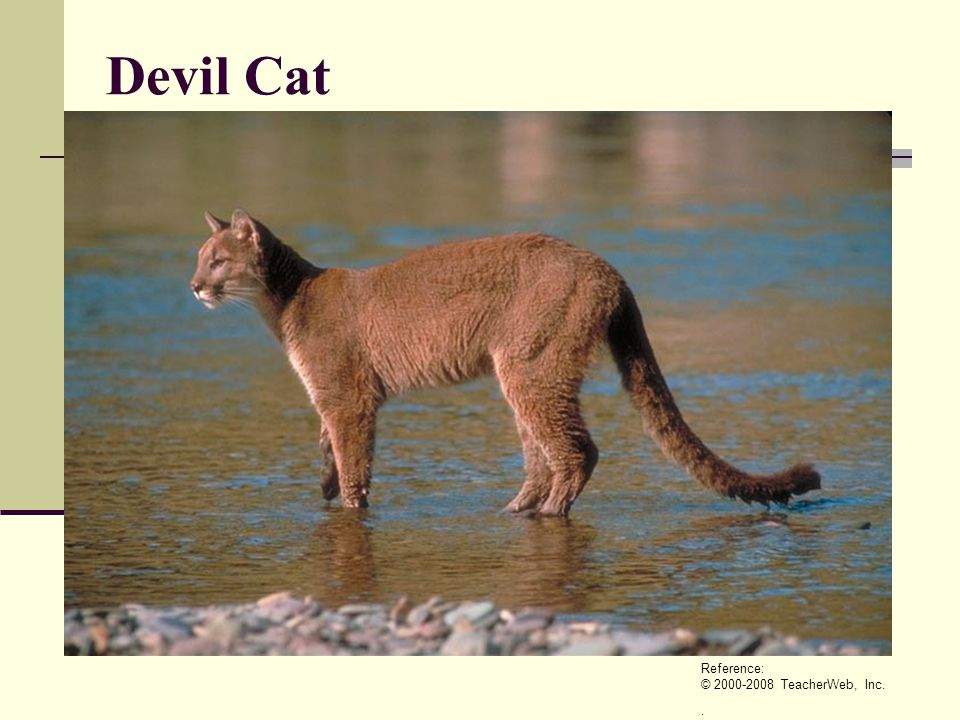 Devil Cat Reference: © 2000-2008 TeacherWeb, Inc. .