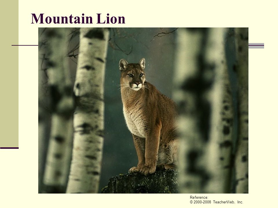 Mountain Lion Reference: © 2000-2008 TeacherWeb, Inc.
