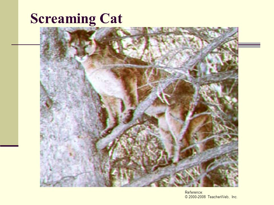 Screaming Cat Reference: © 2000-2008 TeacherWeb, Inc.