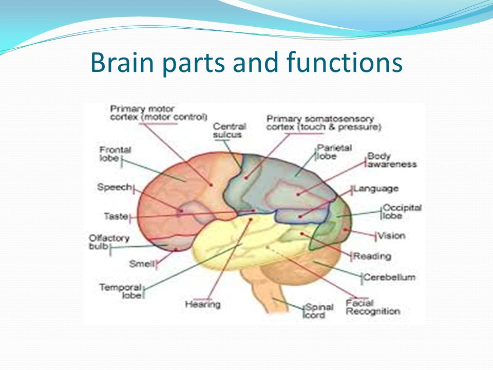 Sensory organs and their functions