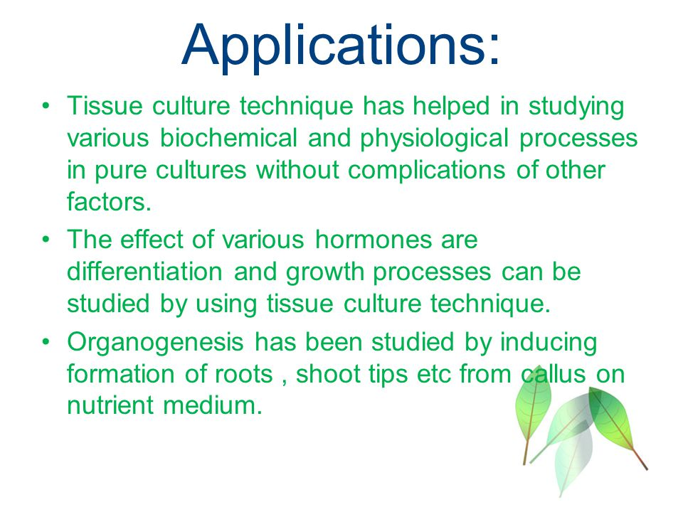Thesis online on plant tissue culture