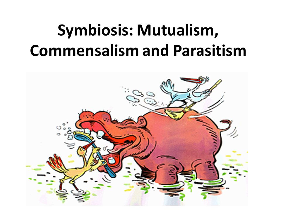symbiosis mutualism The term mutualism refers to a relationship in biology or sociology that is mutually  beneficial to two living things this relationship can be within the species,.