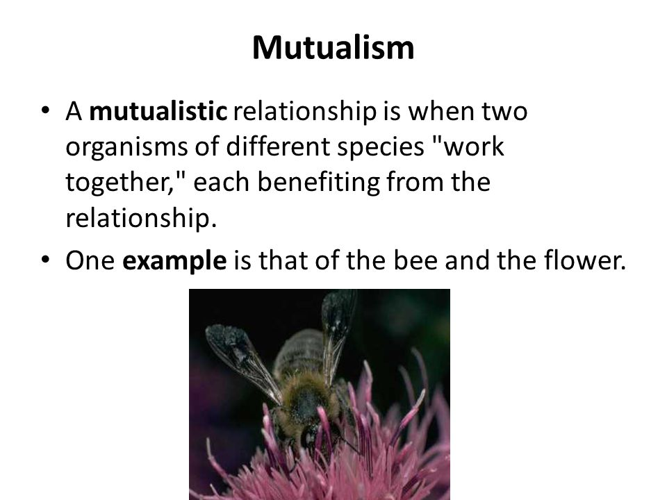 what is the symbiotic relationship between bees and flowers