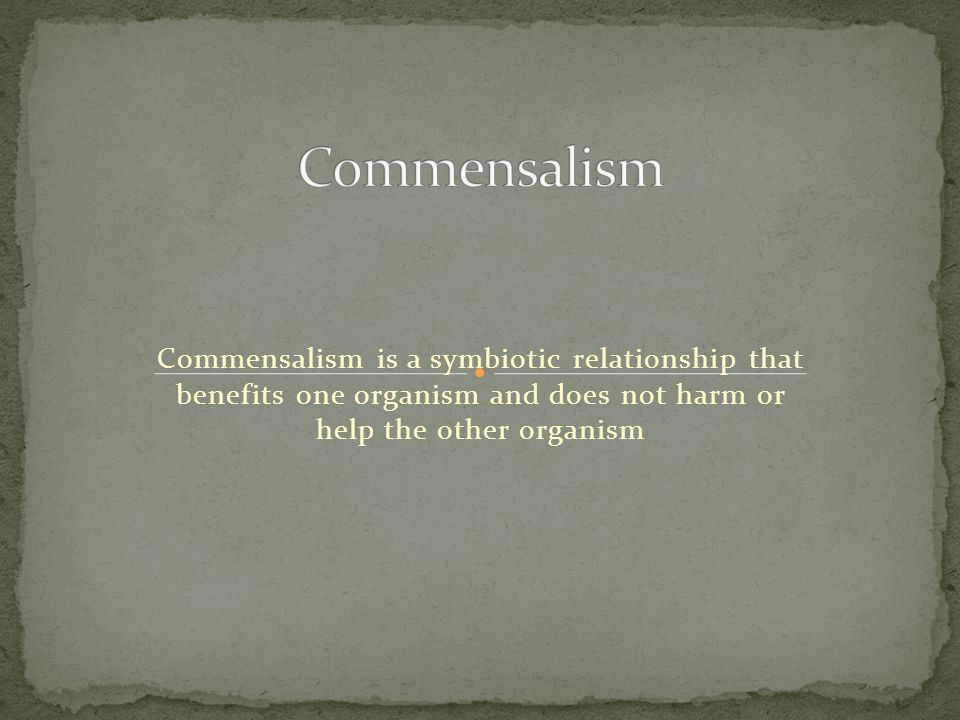 what does the symbiotic relationship commensalism mean