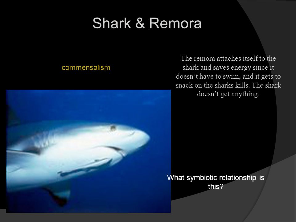 remora and shark symbiotic relationship