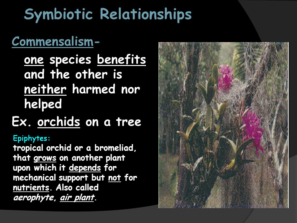 epiphytes and tropical trees symbiotic relationship