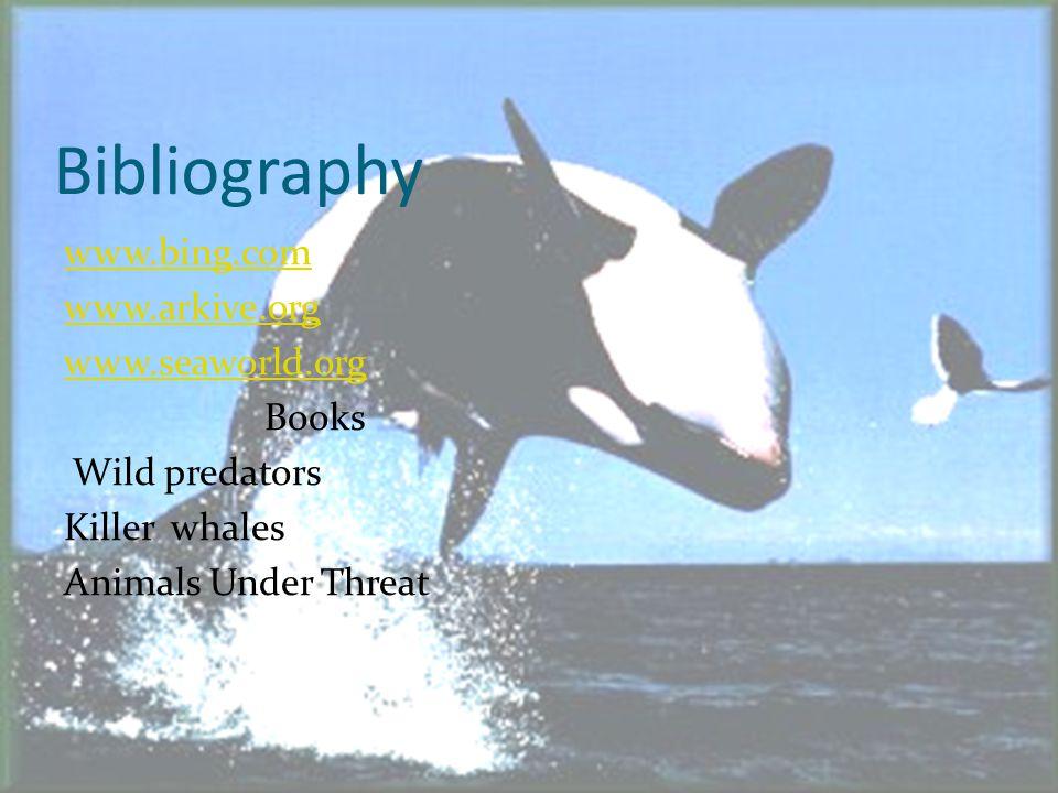 Bibliography www.bing.com www.arkive.org www.seaworld.org Books Wild predators Killer whales Animals Under Threat