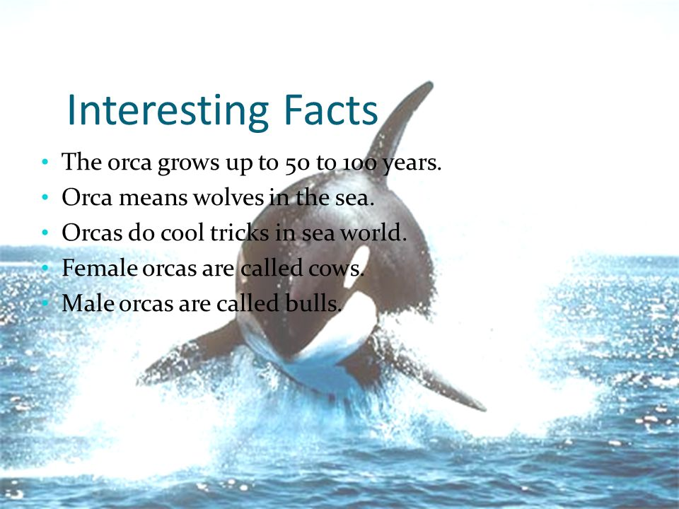 many interesting facts about orcas And for some facts that come with laughs, see these 40 facts so funny  in the  journal of the acoustical society of america reveals that orcas.