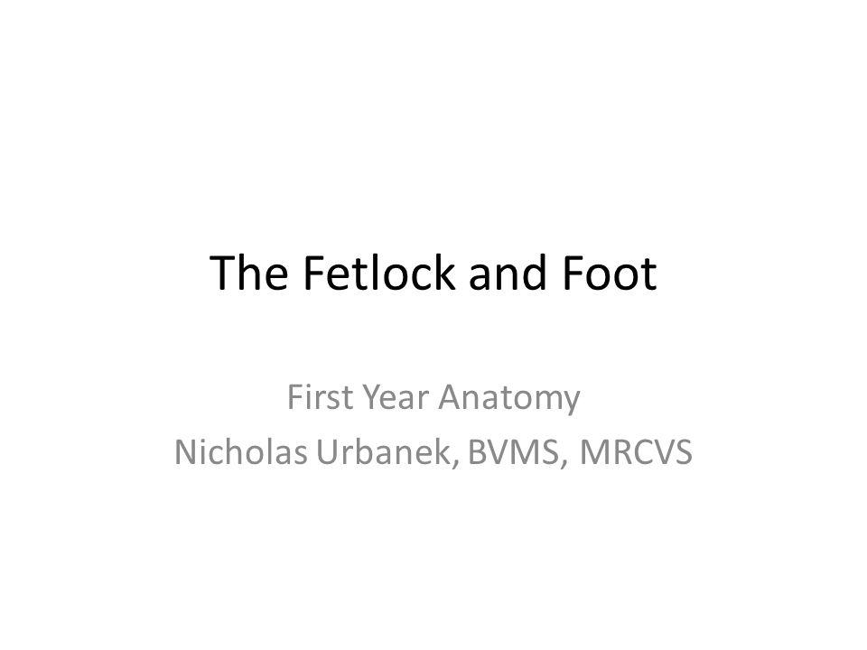 First Year Anatomy Nicholas Urbanek, BVMS, MRCVS - ppt video online ...