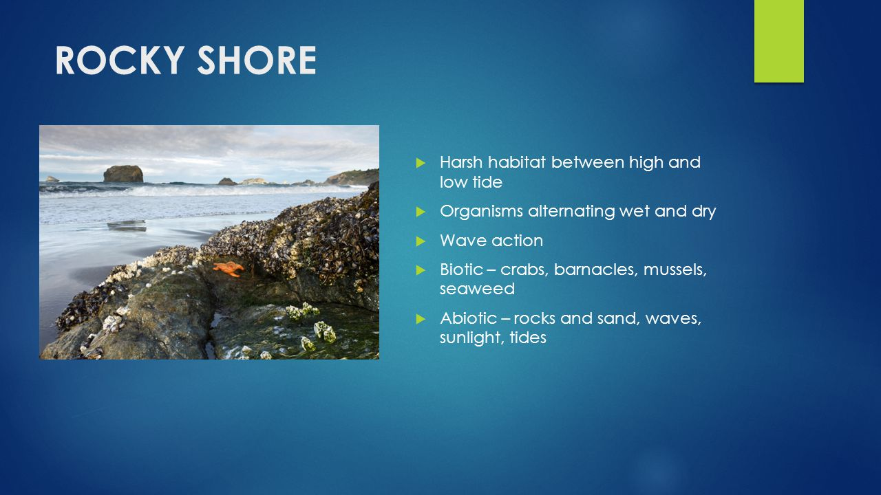 Exploring Marine Ecosystems Ppt Video Online Download