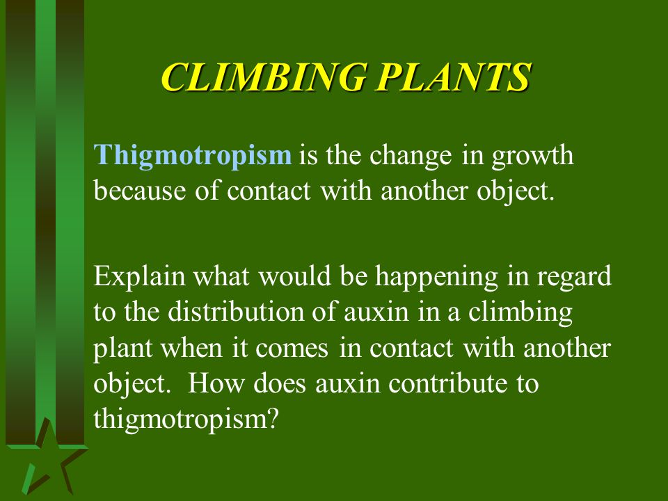 CLIMBING PLANTS Thigmotropism is the change in growth because of contact with another object.