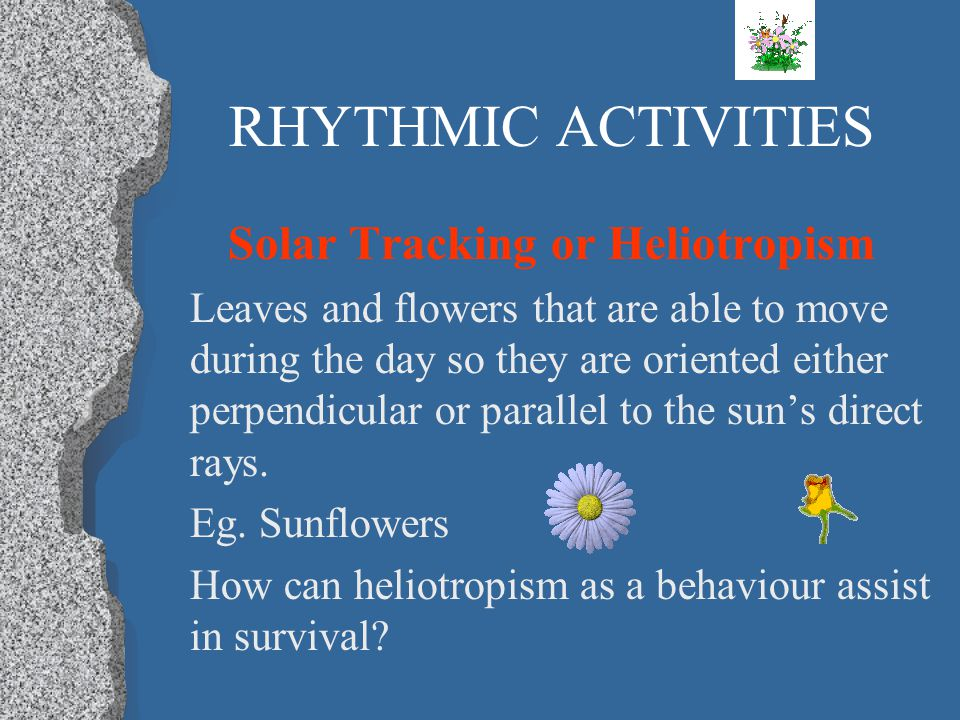 Solar Tracking or Heliotropism