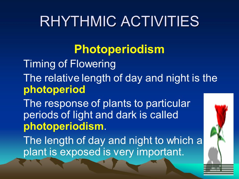 RHYTHMIC ACTIVITIES Photoperiodism Timing of Flowering