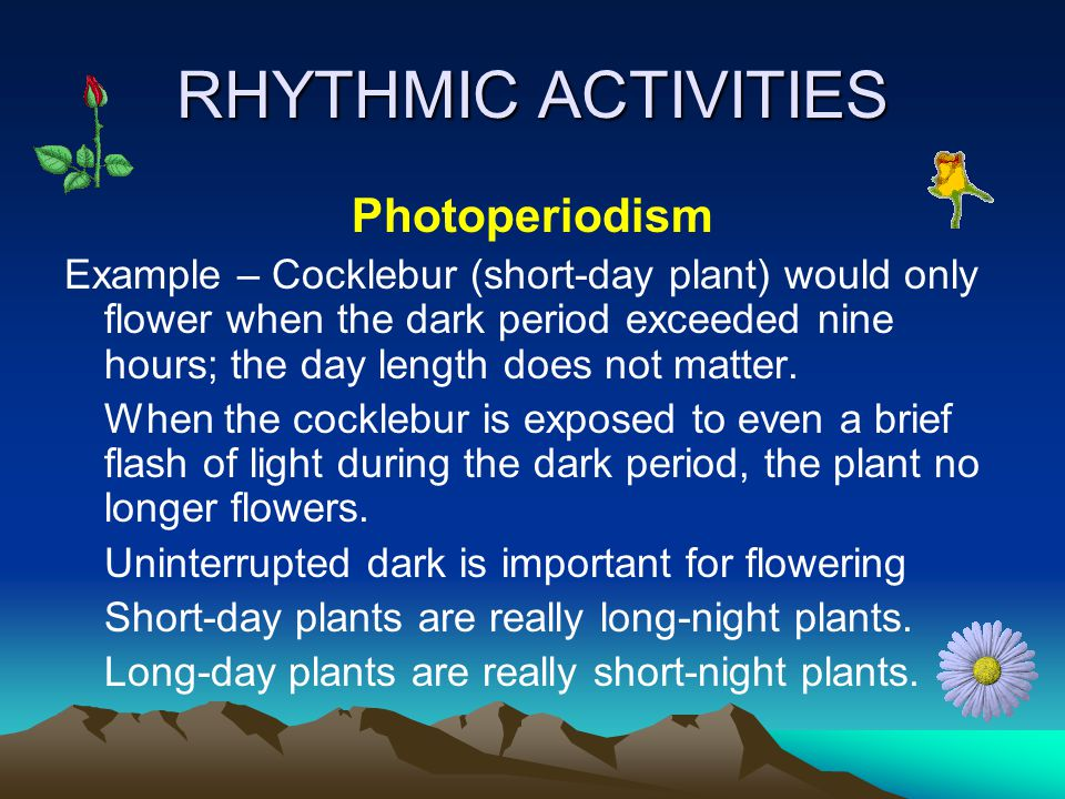 RHYTHMIC ACTIVITIES Photoperiodism