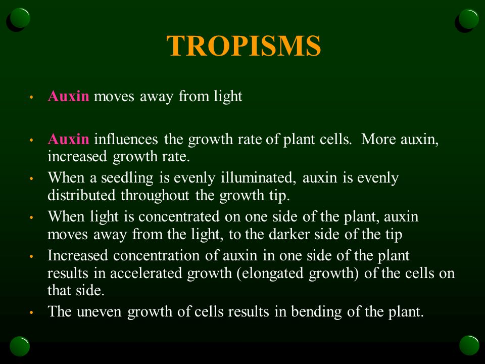 TROPISMS Auxin moves away from light