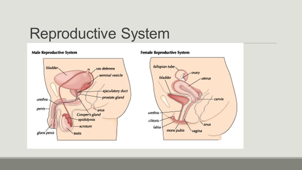 reproductive system Exposure to environmental pollutants can lead to diseases, disorders, and conditions that affect the function of male and female reproductive systems these problems can occur at any stage in life and include birth defects of the reproductive system, pregnancy complications, early puberty.