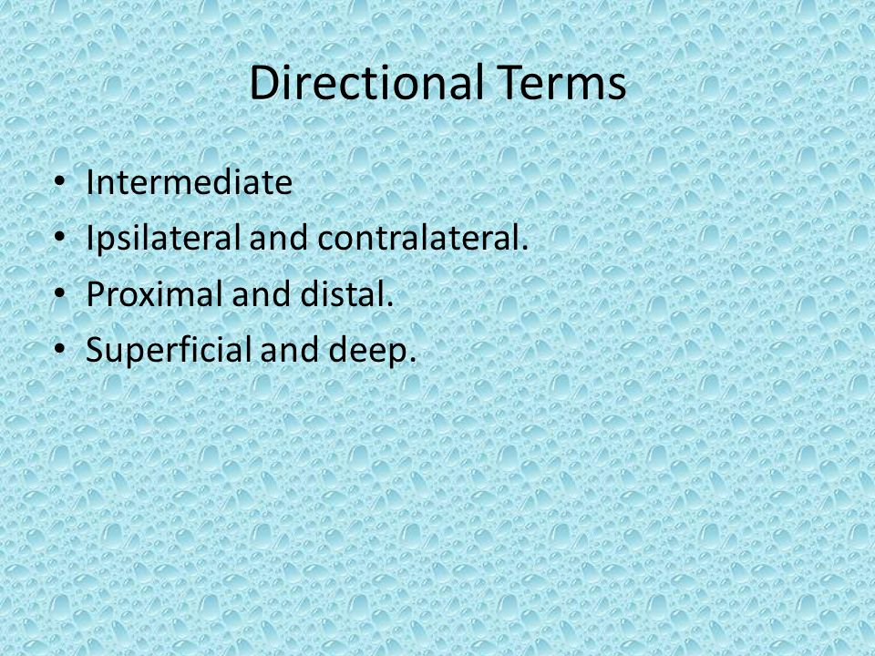 Directional Terms Intermediate Ipsilateral and contralateral.