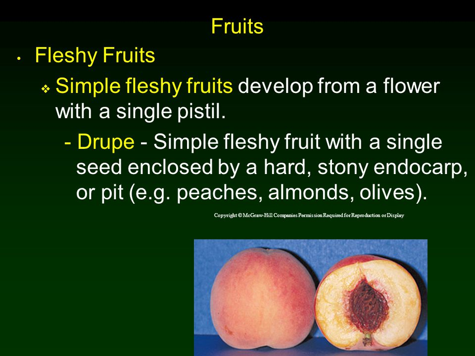 Simple fleshy fruits develop from a flower with a single pistil.