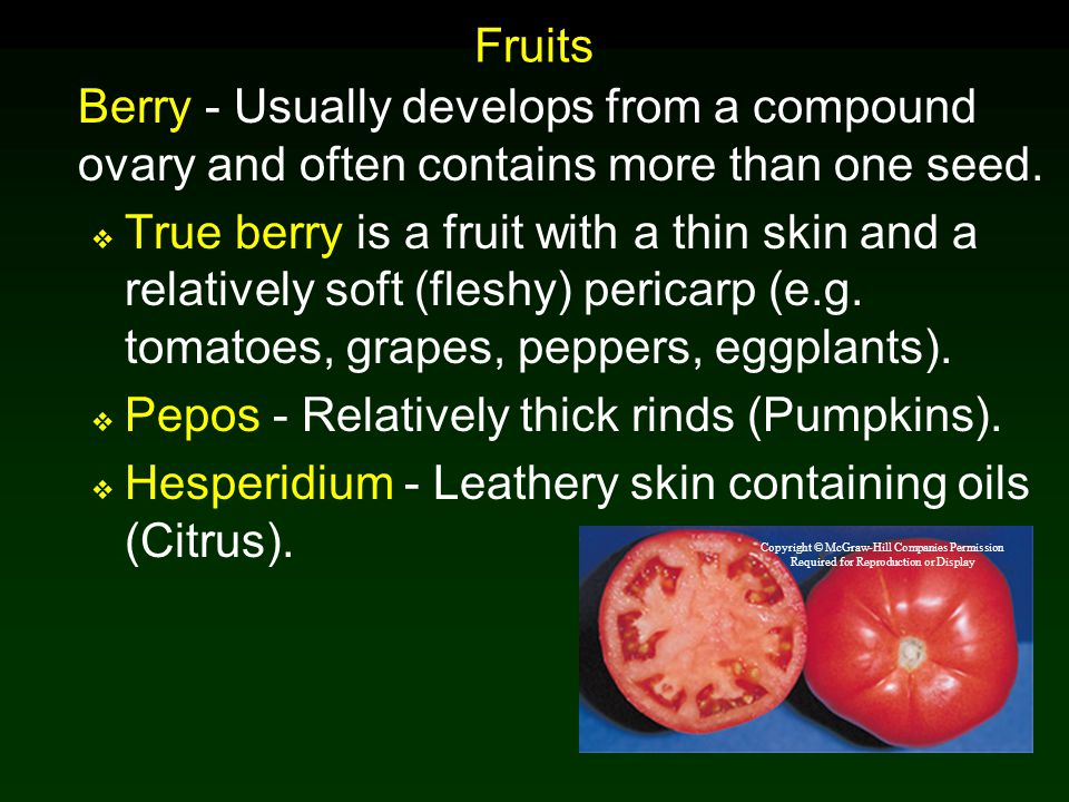 Pepos - Relatively thick rinds (Pumpkins).