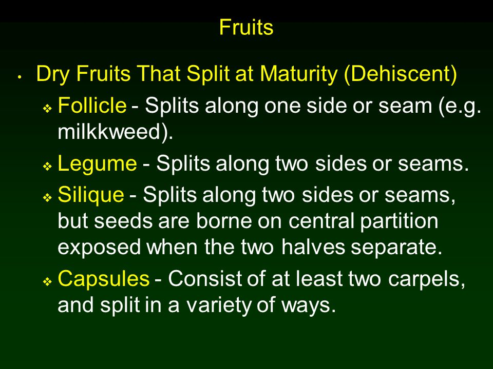 Fruits Dry Fruits That Split at Maturity (Dehiscent) Follicle - Splits along one side or seam (e.g. milkkweed).