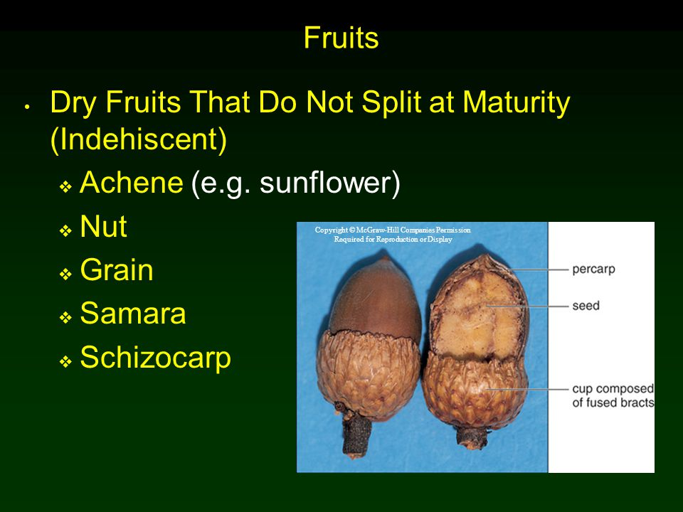 Dry Fruits That Do Not Split at Maturity (Indehiscent)