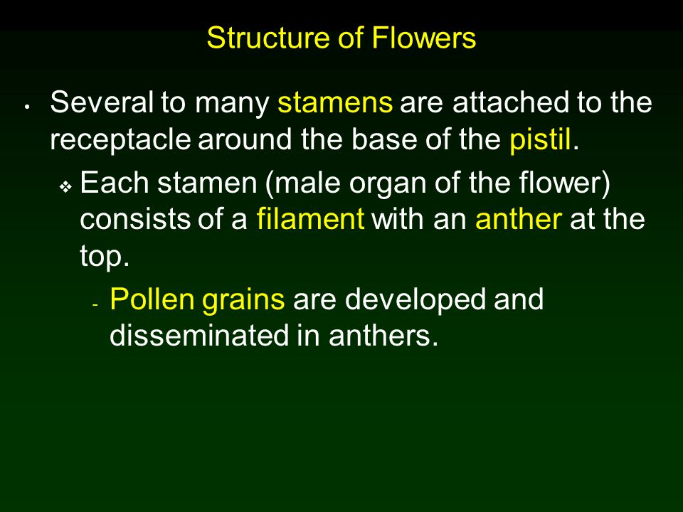 Structure of Flowers Several to many stamens are attached to the receptacle around the base of the pistil.