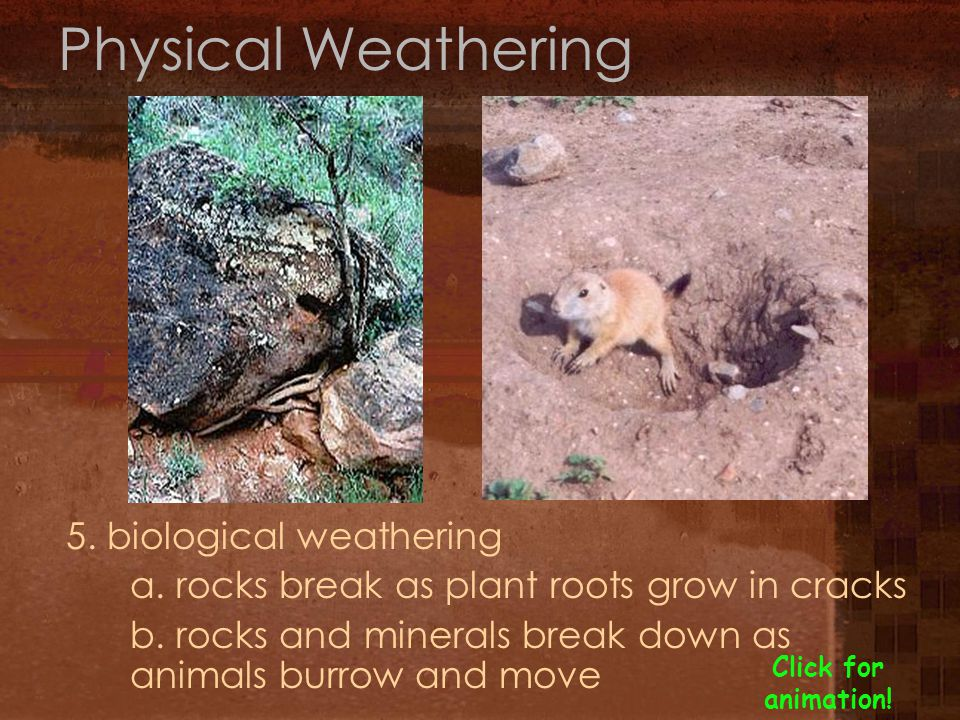weathering by animals