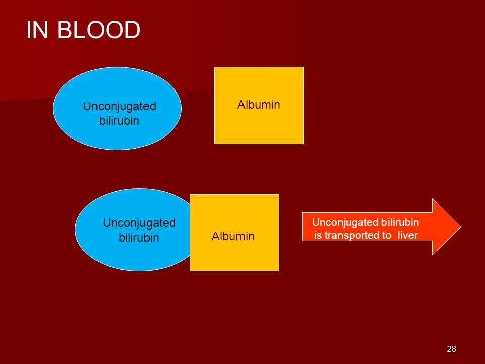 IN BLOOD Albumin Unconjugated bilirubin Unconjugated bilirubin Albumin