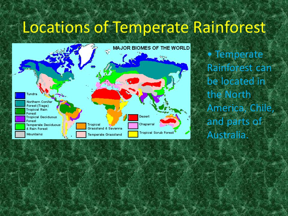 Temperate Rainforest. - ppt download