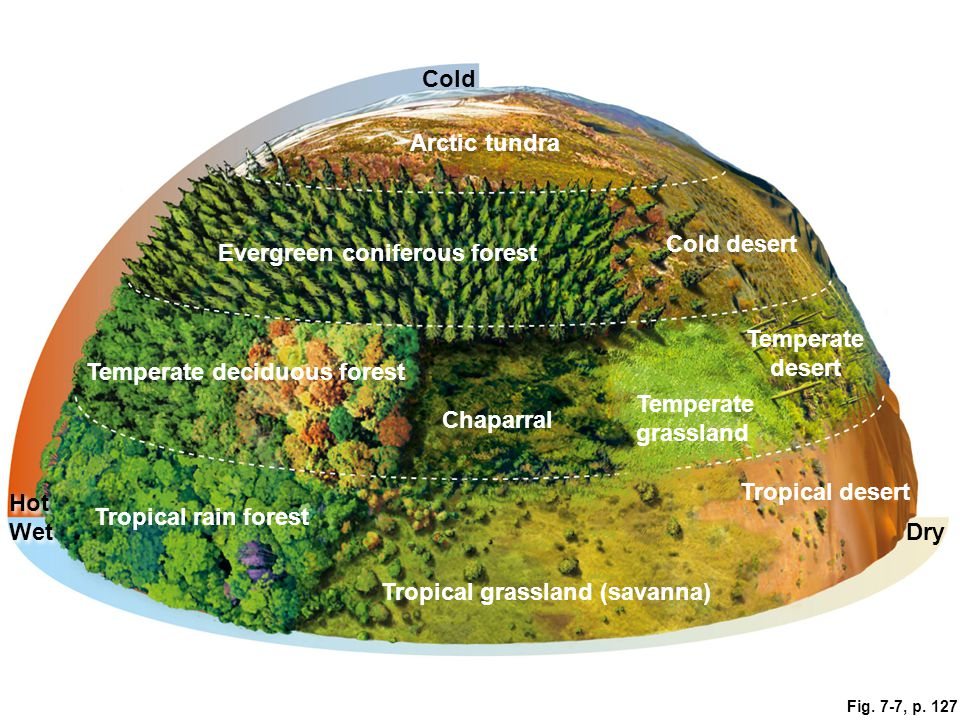 tropical rainforests vs tropical grasslands This struggle determines whether vast regions of the tropics and subtropics are  covered in grasslands, savannas or forests but a new study.