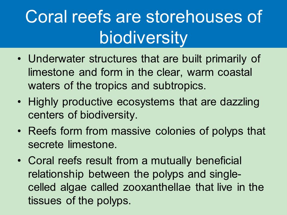 relationship between butterfly fish and coral polyps zooxanthellae