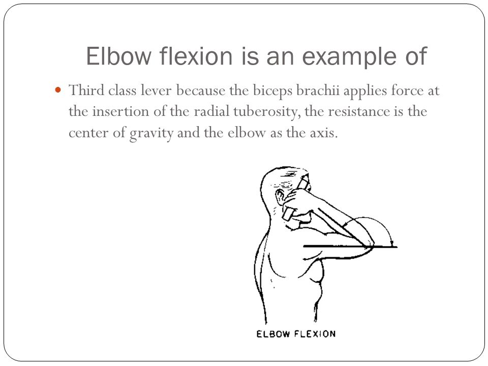 Elbow flexion is an example of
