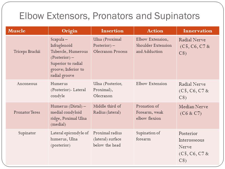 Elbow Extensors, Pronators and Supinators