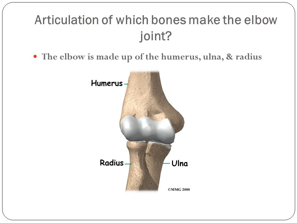 Articulation of which bones make the elbow joint