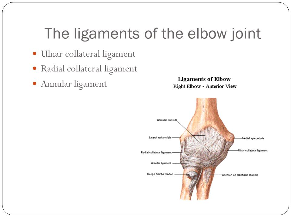 The ligaments of the elbow joint