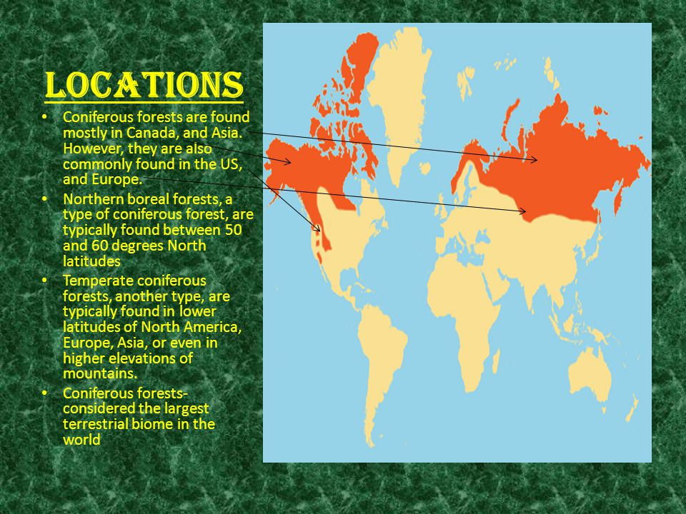By Jordan Heatherly Salyer Period APES Ppt Video Online Download - Coniferous forest us map