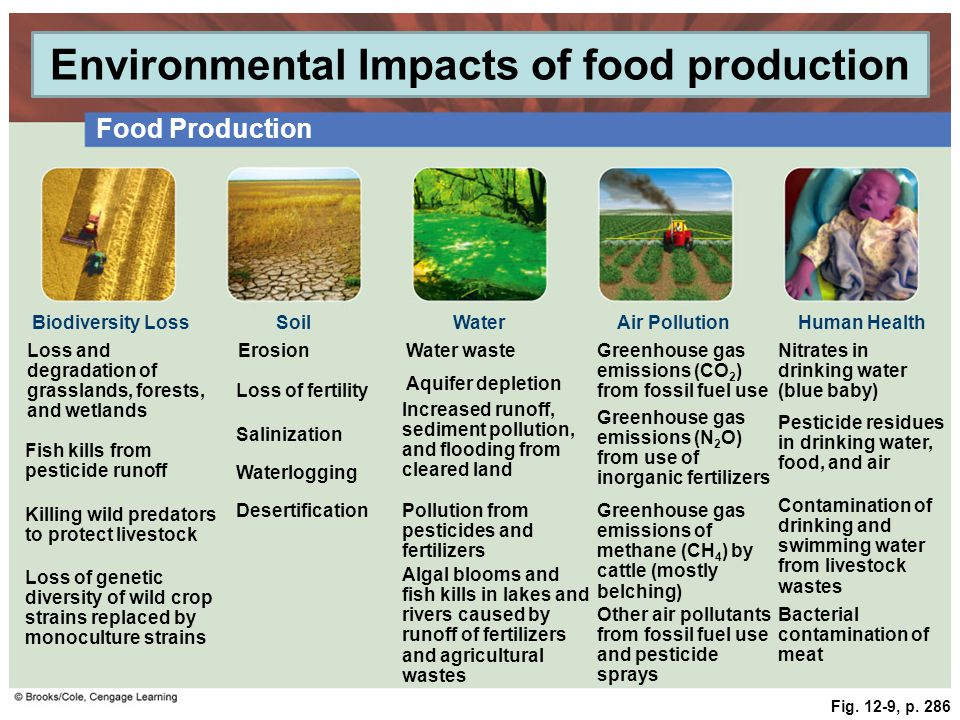 Soil Erosion Impact On Food Production In Grasslands