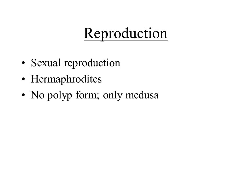 Reproduction Sexual reproduction Hermaphrodites