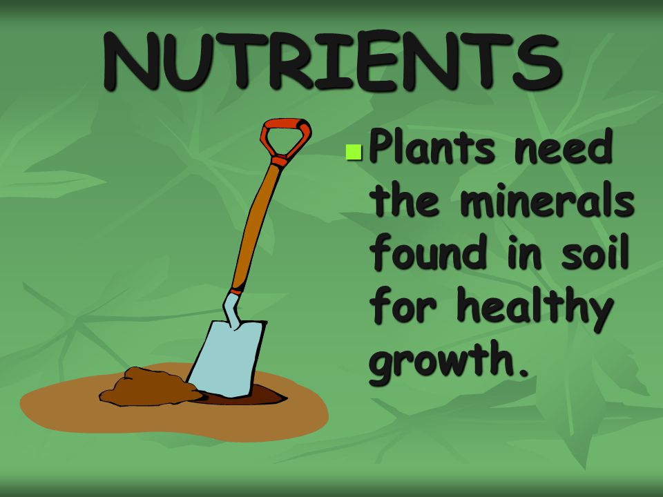 Plants ppt download for Minerals in dirt