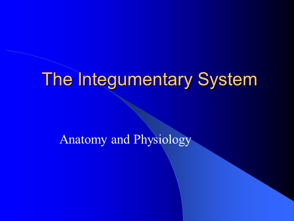 essay questions on integumentary system Report this essay view full essay module 02 case study: integumentary system part i—soaking up the sun questions 1 what.
